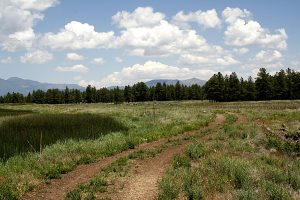 Kachina Wetlands
